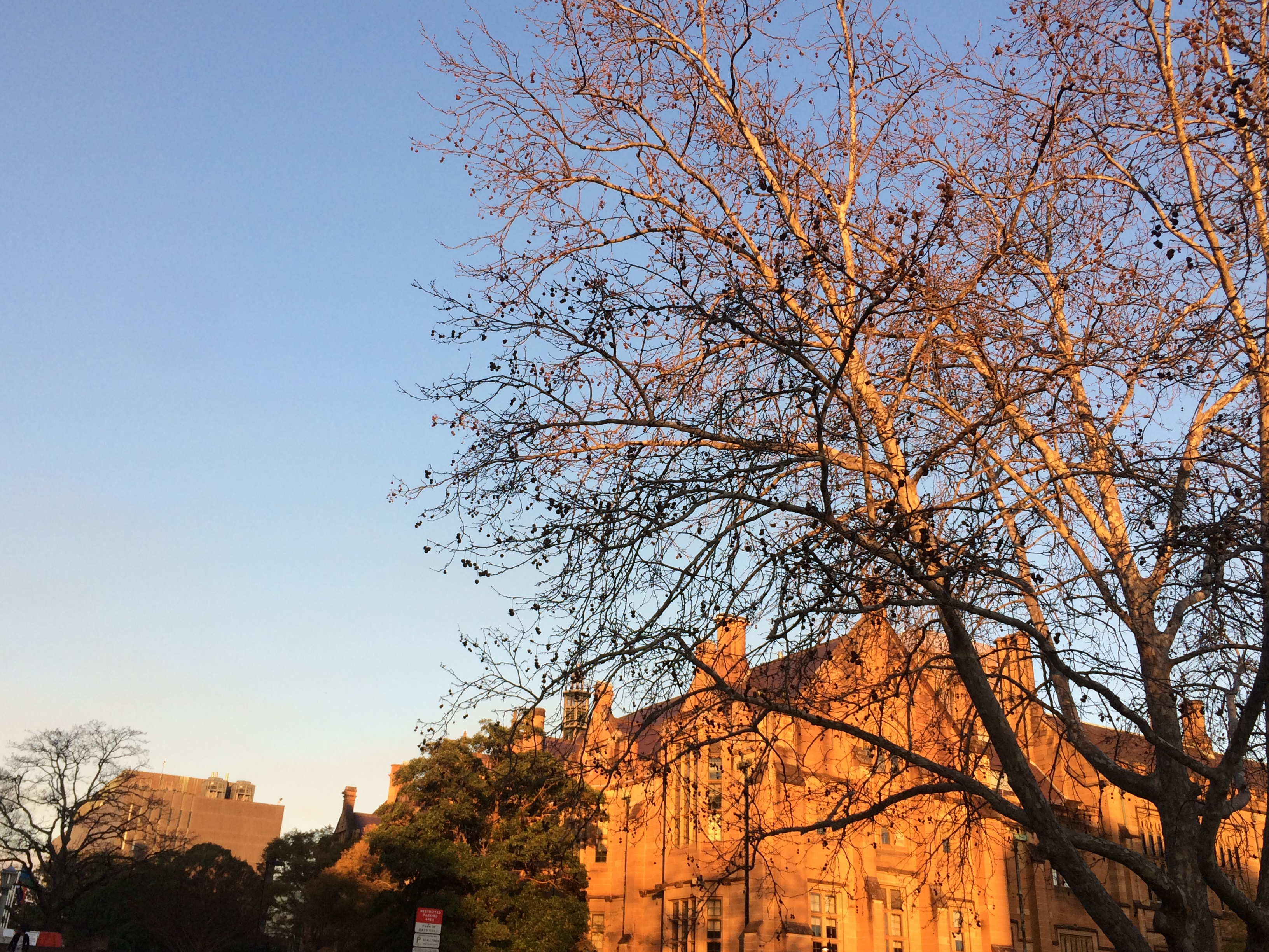 The afternoon of Sydney Uni
