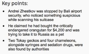 """""""Key points"""" in Bali officials detain Russian man suspected of drugging and smuggling orangutan"""