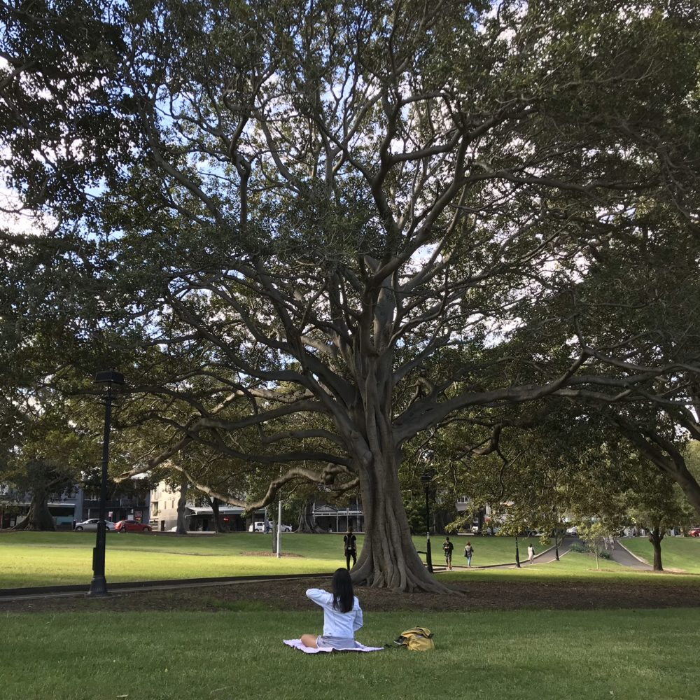 A yoga girl under the tree