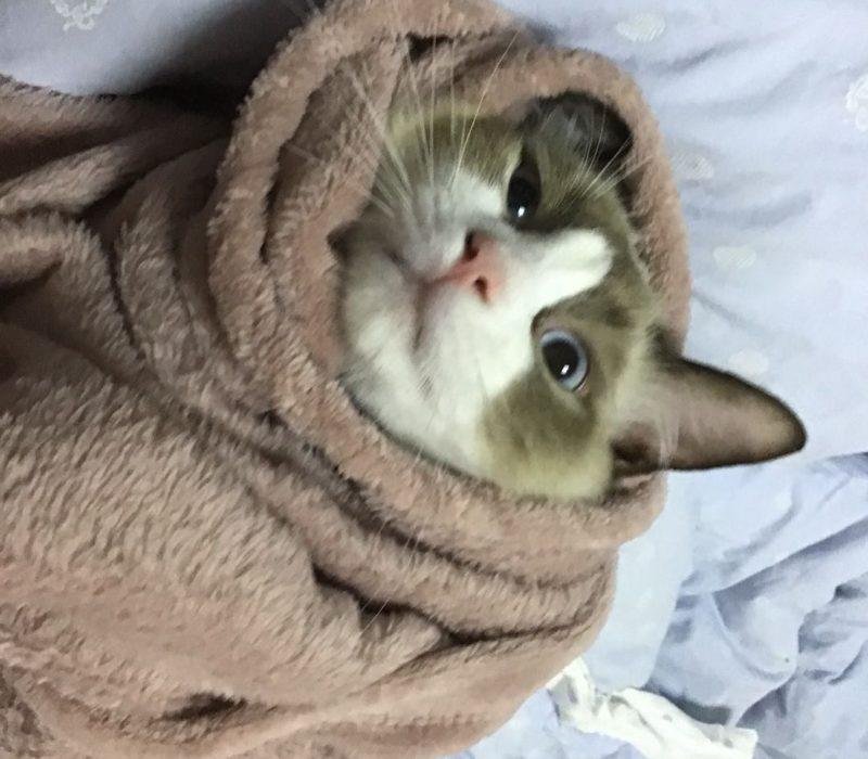Cookie(10 months)
