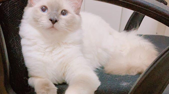 Milky the cat