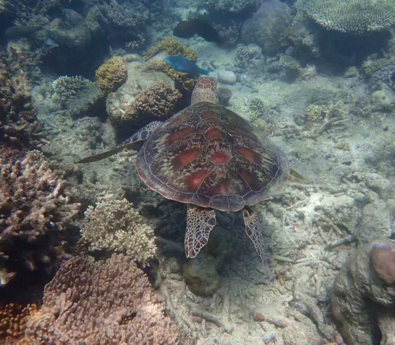 Turtle from Keynes